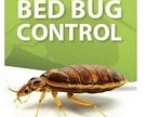 Easy and Non Toxic Way to Detect & Kill Bed Bugs in Hotels