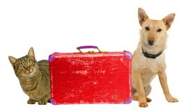 How to Travel With Your Pet on a Plane